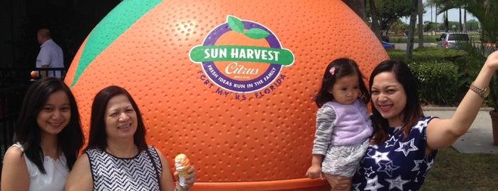 Sun Harvest Citrus is one of Gulf coast.