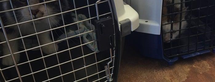 Westbury Animal Hospital is one of Diana : понравившиеся места.