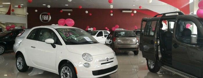 Fiat Paulitalia is one of Dealers.