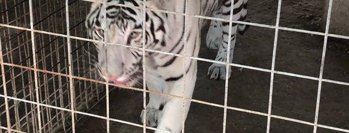 G.W. Exotic Animal Park is one of Mattさんの保存済みスポット.