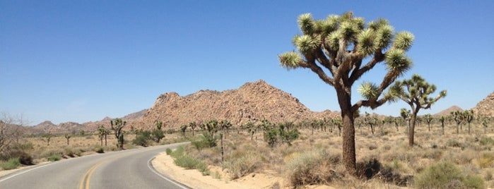 Joshua Tree National Park is one of SoCal Musts.