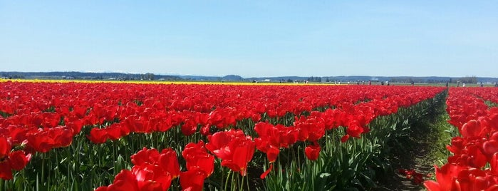 Roozengaarde Tulip Farm is one of Rebeca : понравившиеся места.