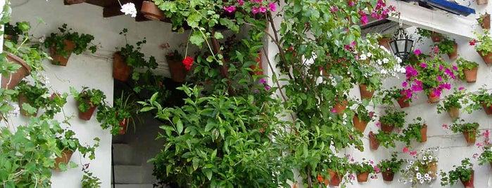 Casa-Patio de la calle Martin de la Roa, 7 is one of Visita virtual a los Patios de cordoba.