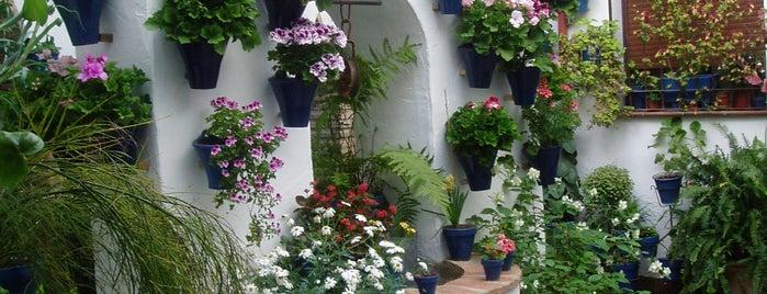 Casa-Patio de la calle Alvar Rodriguez, 11 is one of Visita virtual a los Patios de cordoba.