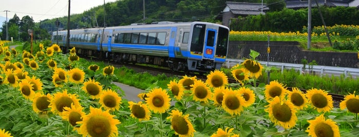 ひまわりの里 まんのう is one of 撮り鉄スポット.