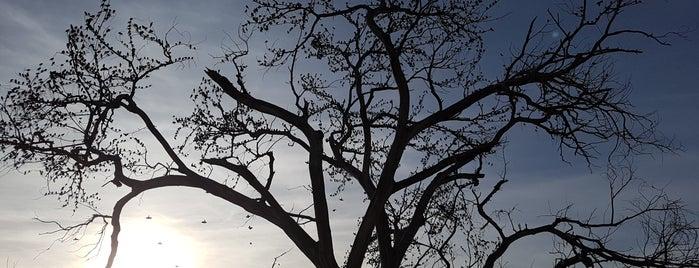 Parque del Encino is one of Posti che sono piaciuti a Paola.