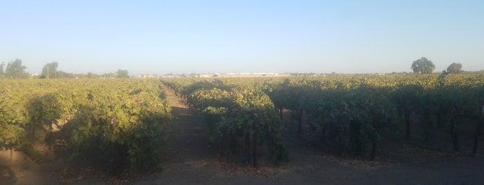 Van Ruiten Family Winery is one of Wineries / Vineyards.
