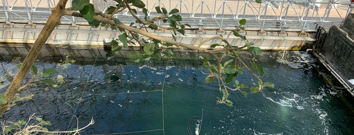 Biosphere2 is one of Fun things to do in Tucson.