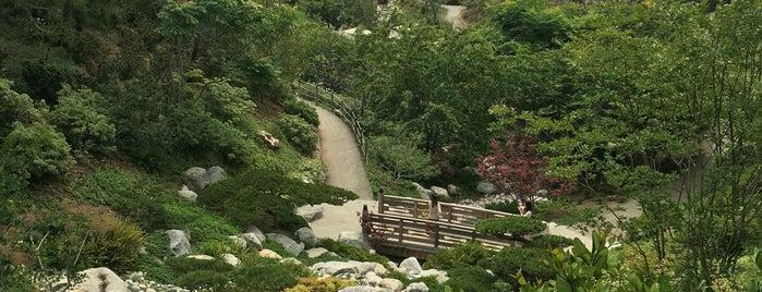 Japanese Friendship Garden is one of Lieux qui ont plu à Munira.