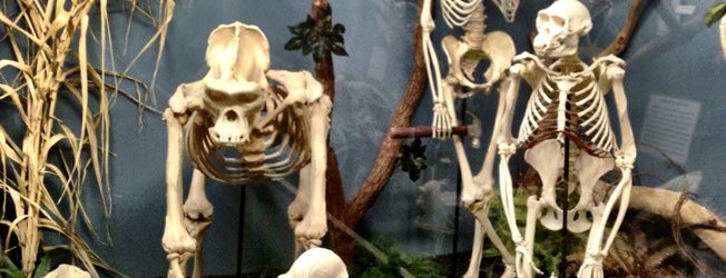 Museum of Osteology is one of Places To Go / Things To Do.
