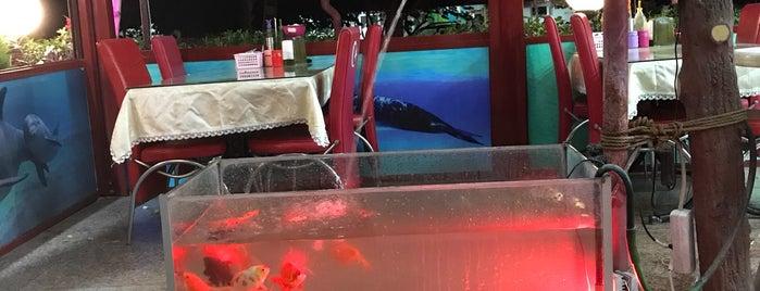mevlana et balık restorantı is one of Maraş Denenecek Yerler.