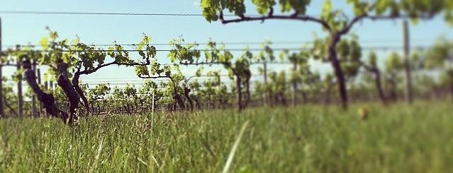 Macari Vineyards & Winery is one of NF 082017.