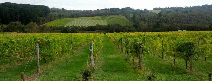 Willow Creek Vineyard is one of Mornington P.