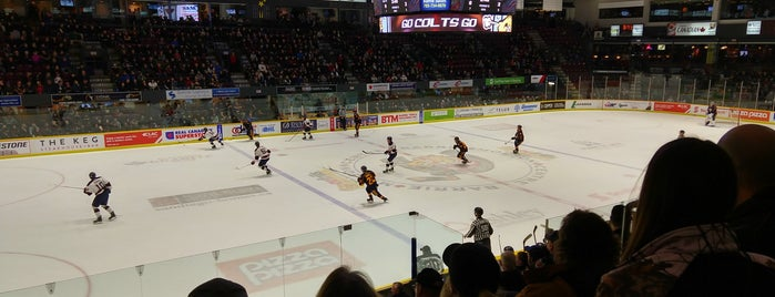 Barrie Molson Centre is one of OHL Arenas.