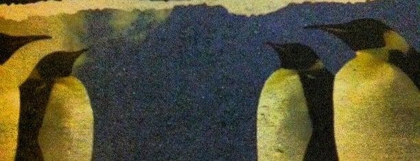 Boteco Pinguim is one of Locais curtidos por Vera.