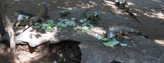 Santuario de Iguanas is one of Tammy'ın Beğendiği Mekanlar.