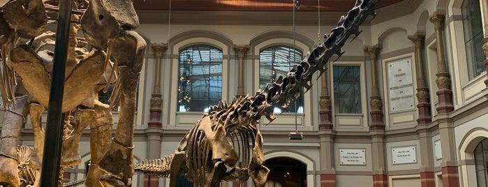 Museum für Naturkunde is one of Locais curtidos por Tavo.