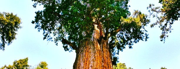 General Sherman Tree is one of California.