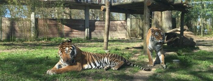 Parc zoologique de Thoiry is one of Locais curtidos por Mathieu.