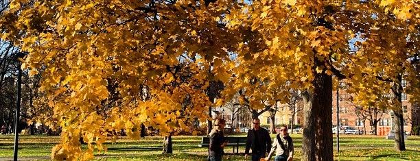 Cambridge Common Park is one of Posti salvati di Anastasia.