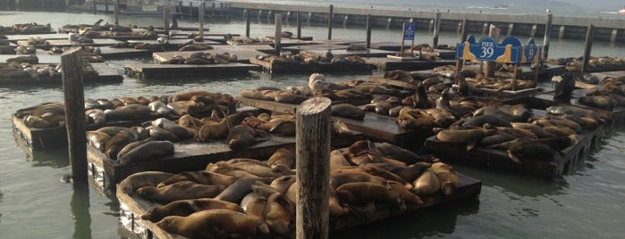 Sea Lions at Pier 39 is one of San Francisco, CA Spots.