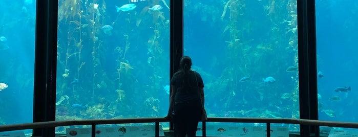 monterey bay aquarium is one of USA Trip 2018.
