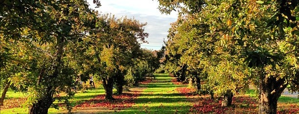 Barton Orchards is one of Upstate.
