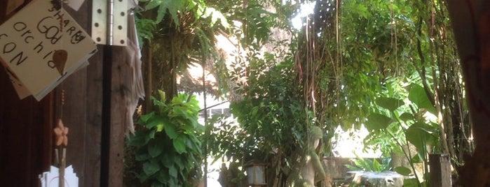 Coffee and Tree is one of สระบุรี, นครนายก, ปราจีนบุรี, สระแก้ว.