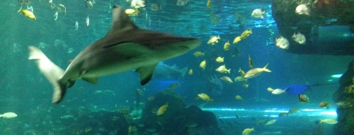 Ripley's Aquarium of Canada is one of Lugares favoritos de Steve.