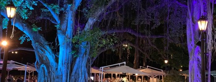 The Beach Bar is one of Honolulu.