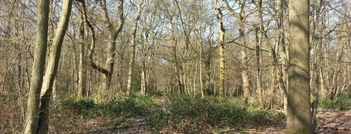 Ruislip Woods is one of Ancient woodland in London.