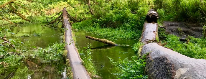 Hoh Rainforest is one of สถานที่ที่ Jeroen ถูกใจ.