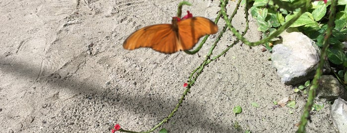 The Butterfly Farm is one of A-B-C Islands.