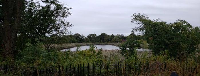 Ridgewood Reservoir is one of NYC bucket list.