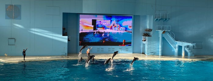 Aqua Museum is one of Lieux qui ont plu à Makiko.