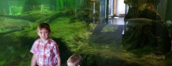 National Mississippi River Museum & Aquarium is one of Lugares favoritos de Jim.