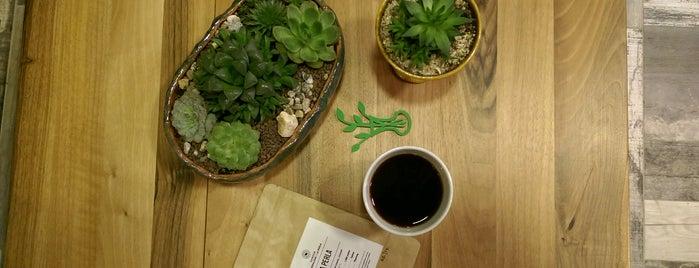 Amelie's Garden Succulent & Coffee is one of Locais curtidos por Tansel Arman.