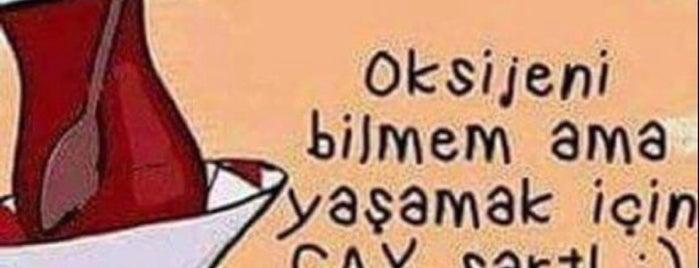 Bu Dünyada değil🎆 is one of Lieux qui ont plu à Mehmet.