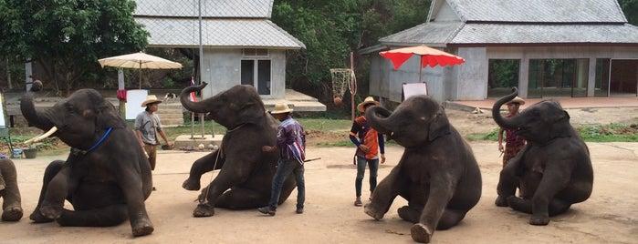 Chokchaitouk Elephant Camp is one of Awesome Chiang Mai.