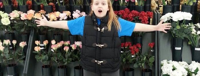 Hobby Lobby is one of Lugares favoritos de Christina.