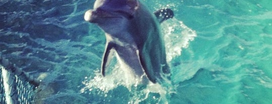 Dolphin Discovery is one of Cancun.