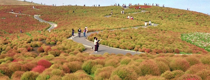Hitachi Seaside Park is one of Far Far Away.