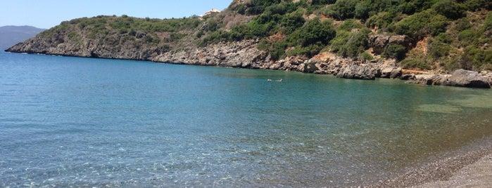 Delfinia Beach is one of Lugares favoritos de Giorgos.