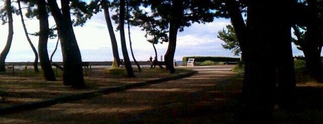 須磨海浜公園 is one of 日本の白砂青松100選.