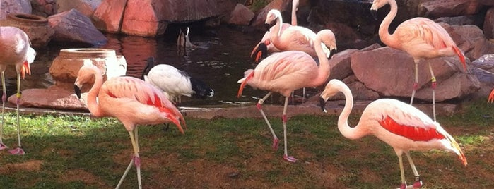 Flamingo Wildlife Habitat is one of #Vegas Badges.