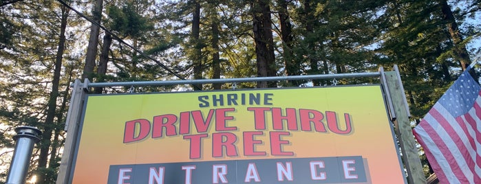 Shrine Drive Through Tree is one of RV vacation.