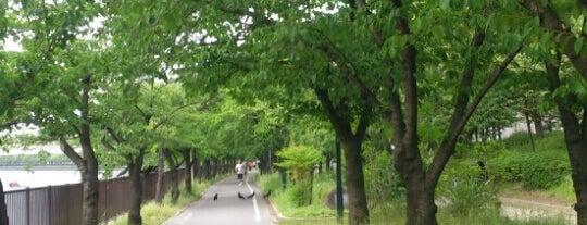 Kema Sakuranomiya Park is one of Osaka-Japan.