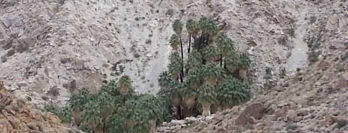 49 Palms Canyon Oasis is one of Psalm Sprangs.