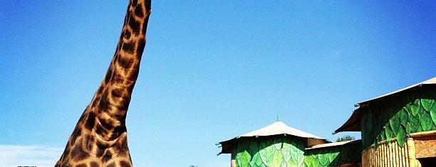 Zoológico is one of Beto Carrero World.