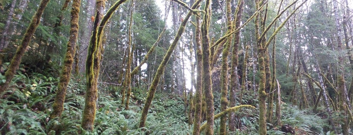Gifford Pinchot National Forest is one of National Recreation Areas.